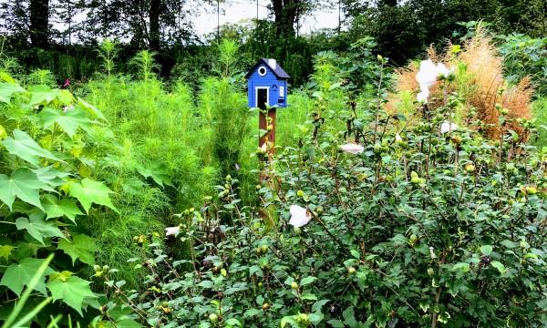 お庭の中に数か所設置されたバードフィード。
